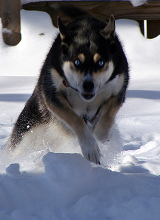 Last winter Takoda was still running like a maniac!
